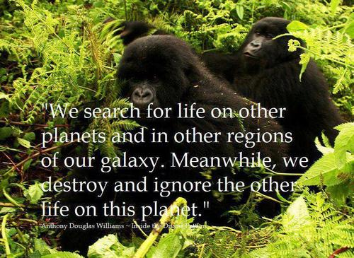 Green Epiphany,Gorillas,green planet,galaxy